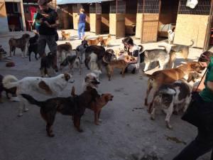 Doggies - FFL