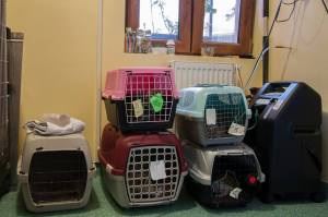 Kittys going home