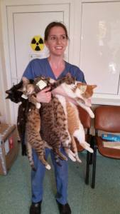 Ruth and 5 kitties